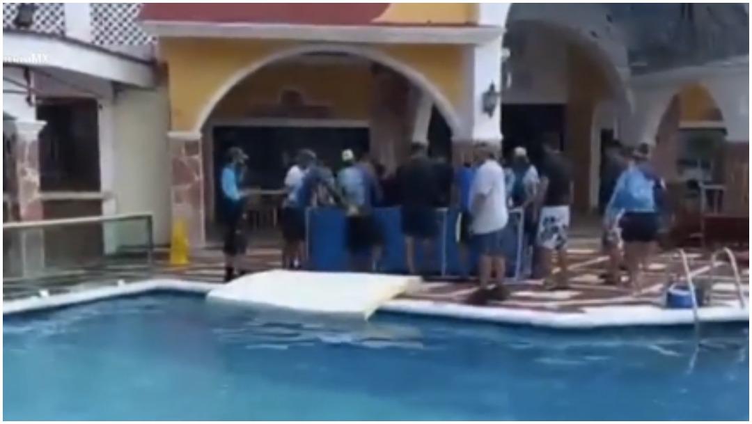 Delfines Cozumel