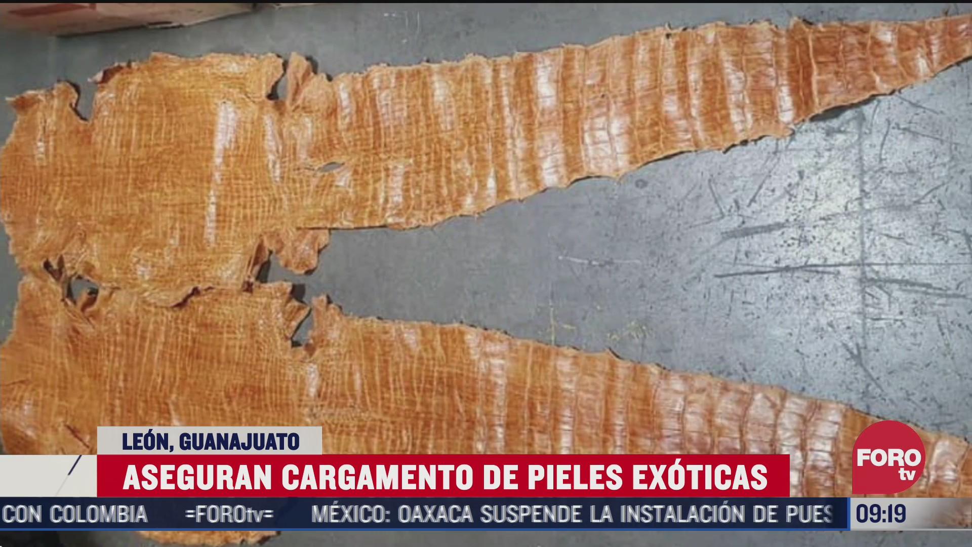 elementos de la guardia nacional interceptan un envio con pieles exoticas