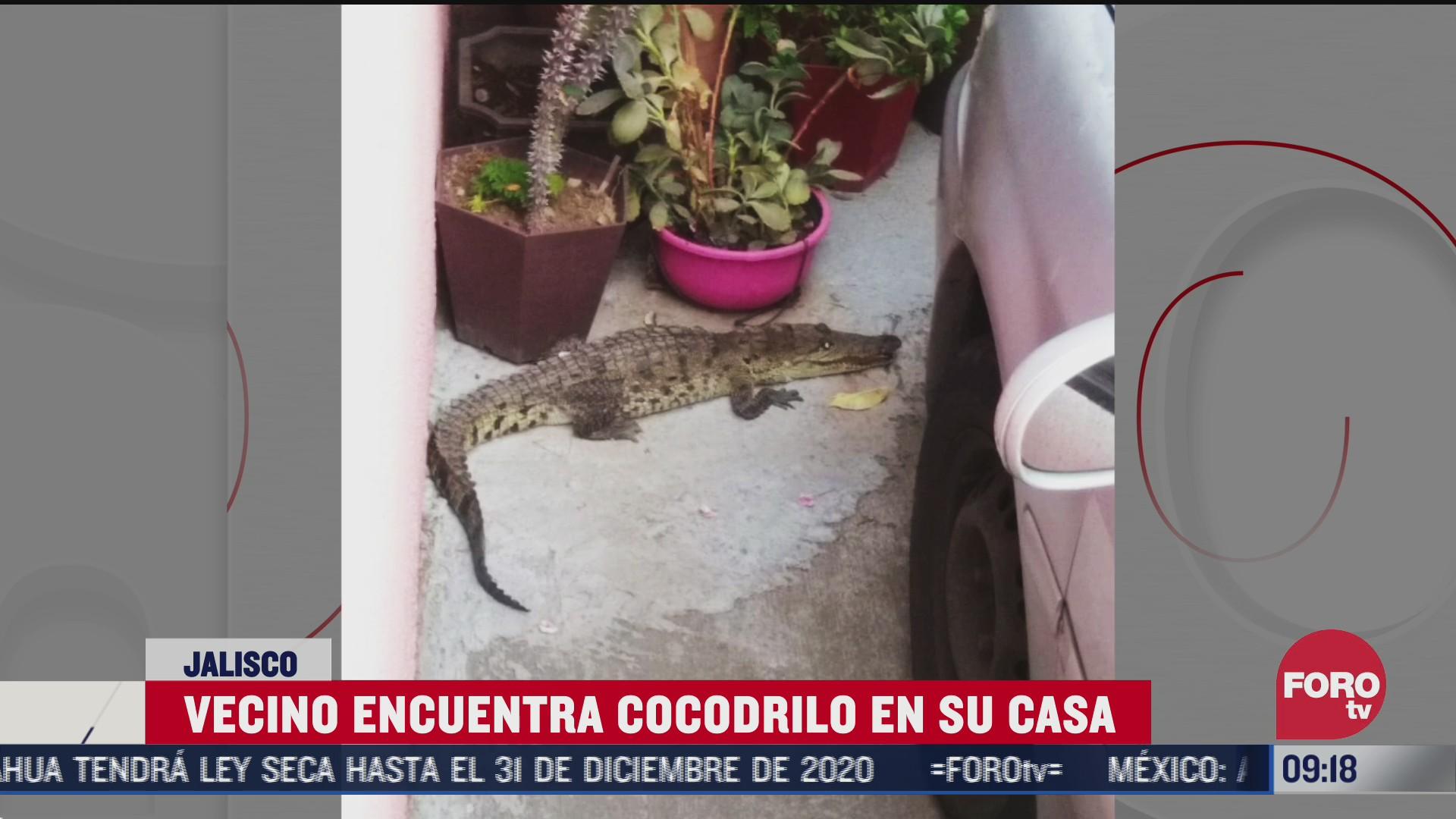 encuentra un cocodrilo en la cochera de su casa en jalisco