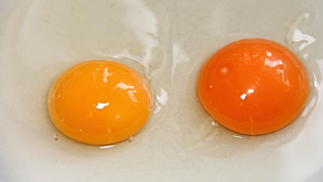 Yema y clara del huevo ¿qué es más nutritivo?