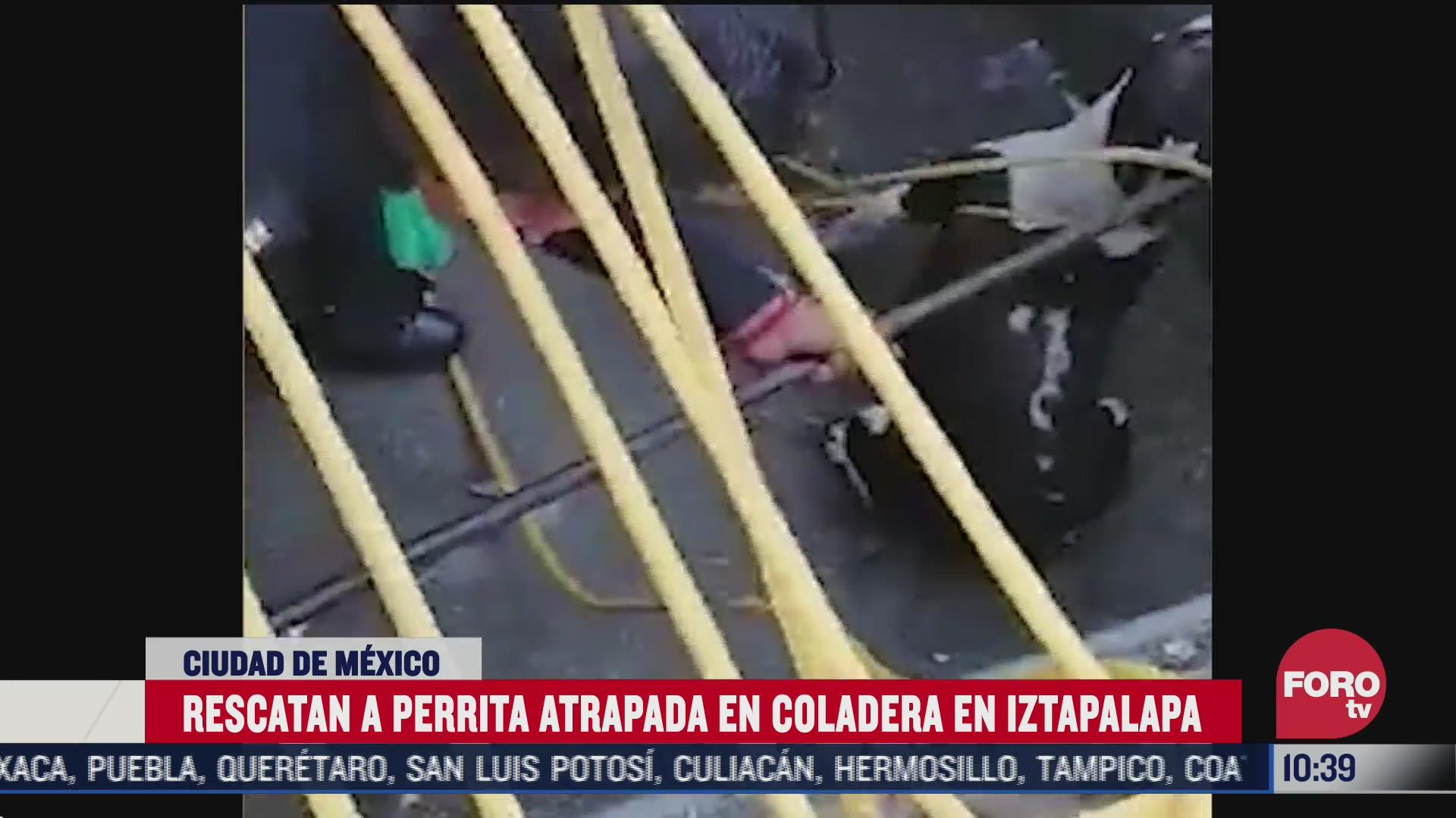 rescatan a perrita pitbull atrapada en una coladera en cdmx