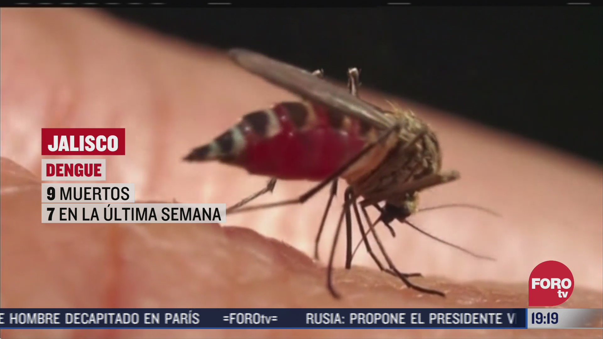 mosquito del dengue causa 9 muertes en Jalisco, México