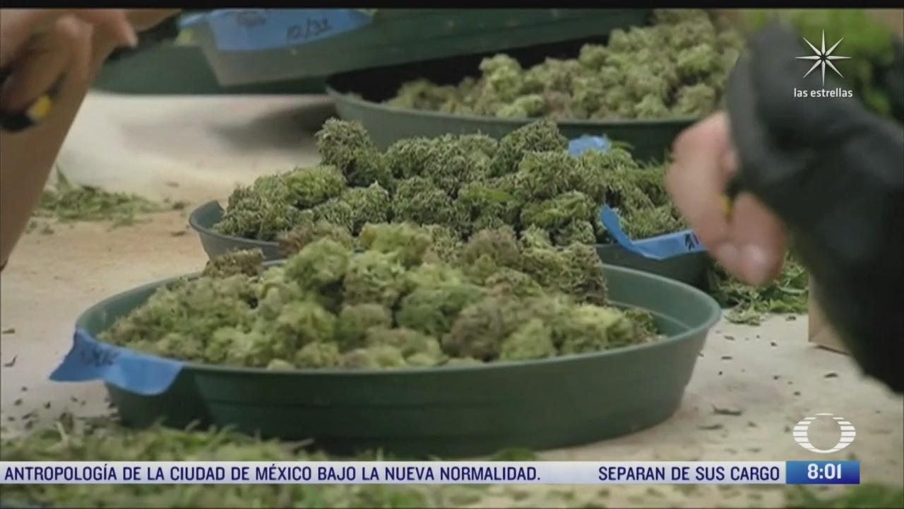 aprueban en varios estados de eeuu el uso de la marihuana
