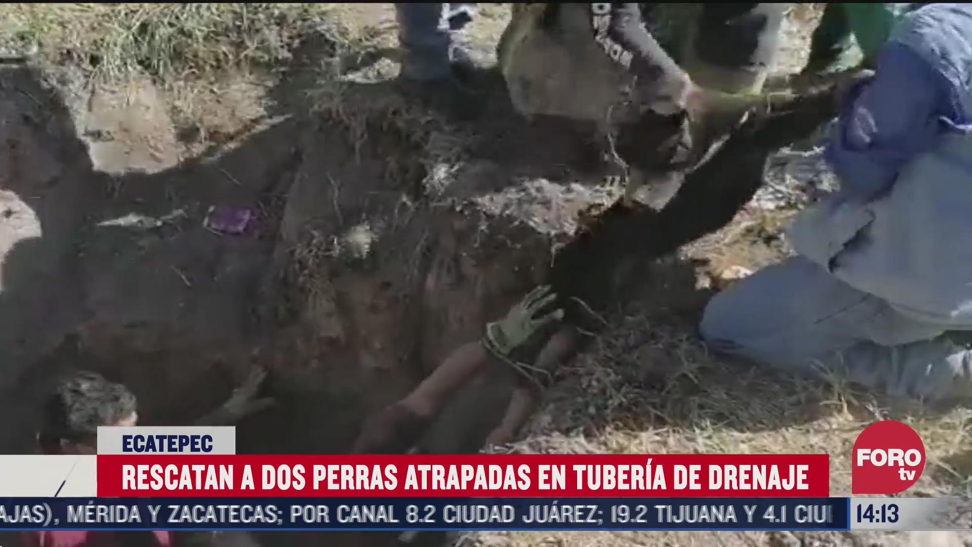 bomberos rescatan perros en drenaje de ecatepec