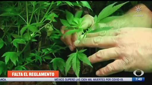 denuncian falta de reglamento sobre marihuana medicinal