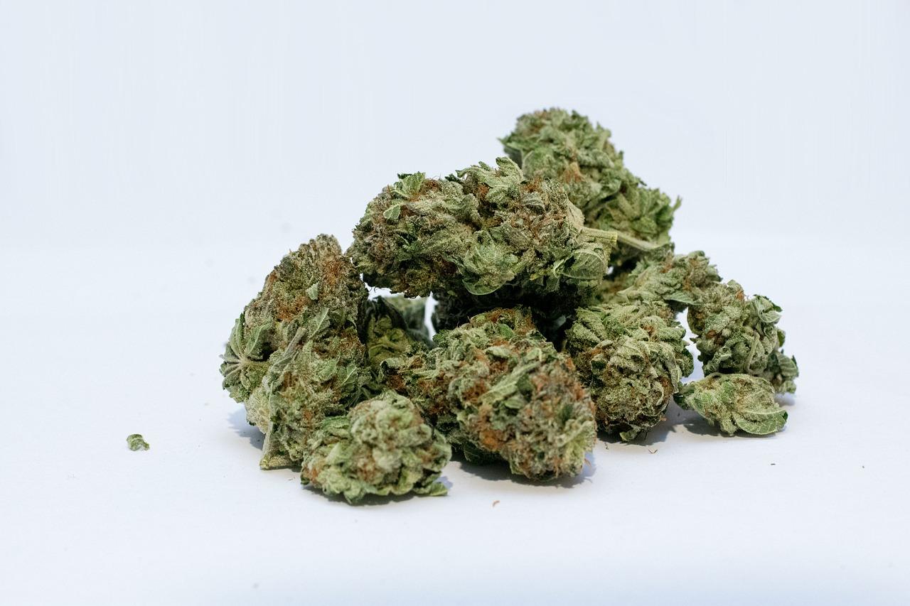 Esta compañía paga 60 mil pesos al mes por catar marihuana