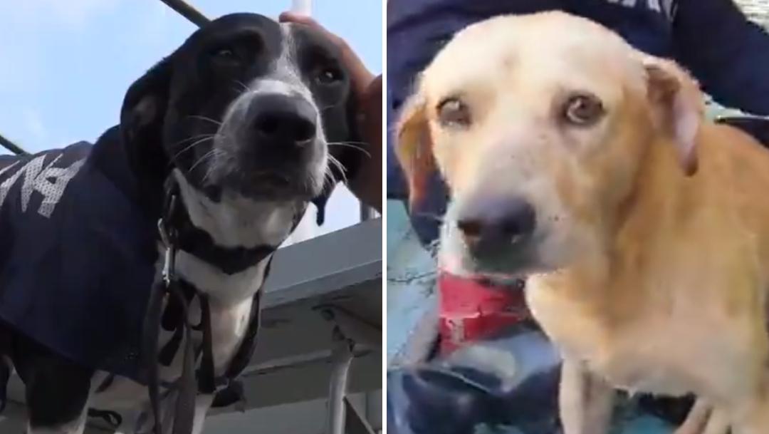 Cuándo anunciará SEMAR el nombres de los perritos rescatados