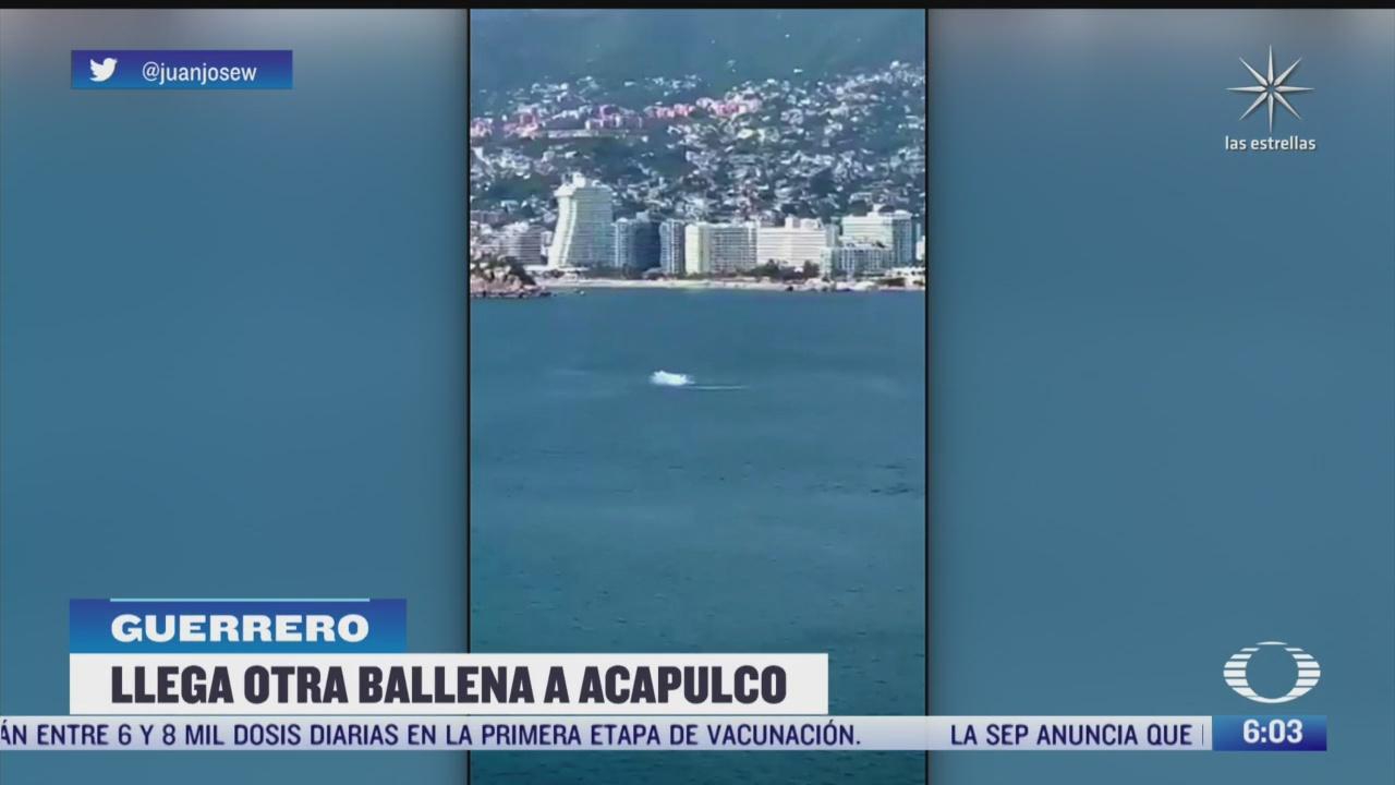 captan a ballena saltando en playa de acapulco