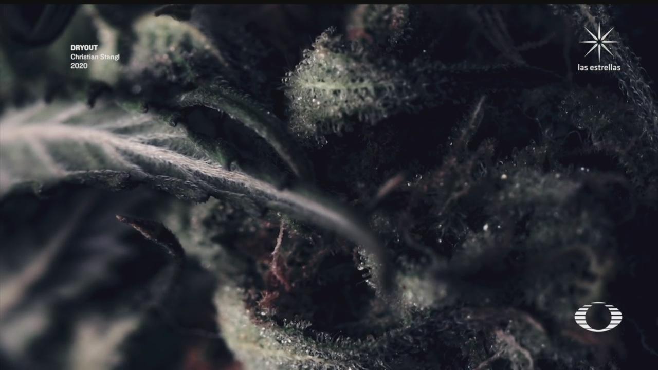 Christian Stangl creó un cortometraje de distintos organismos secándose tras quedarse sin agua
