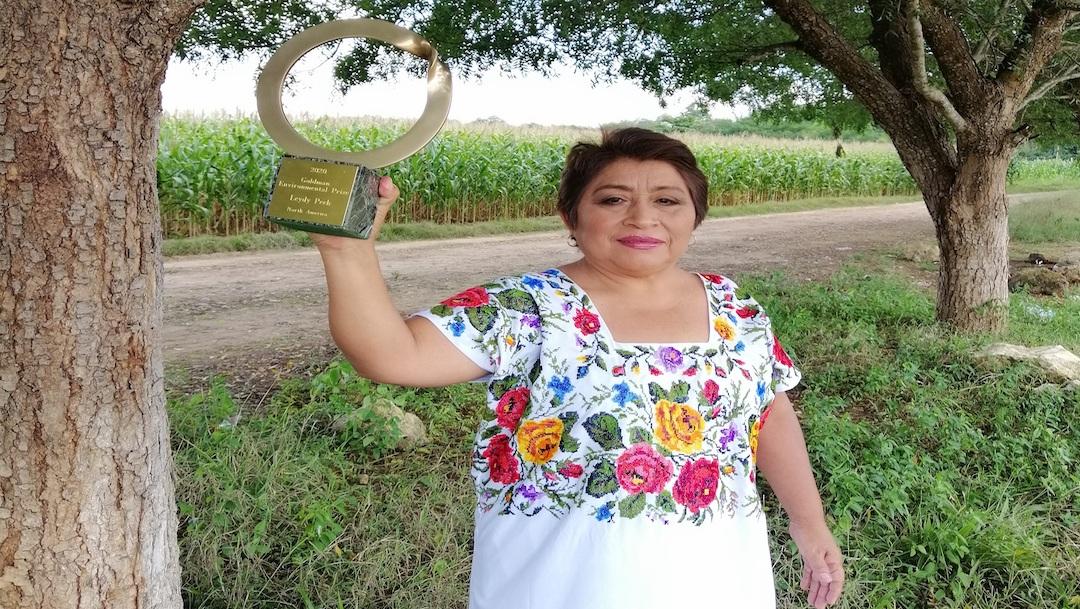 Leydy Pech, apicultora que logró preservar la abeja sagrada maya, gana Premio Goldman