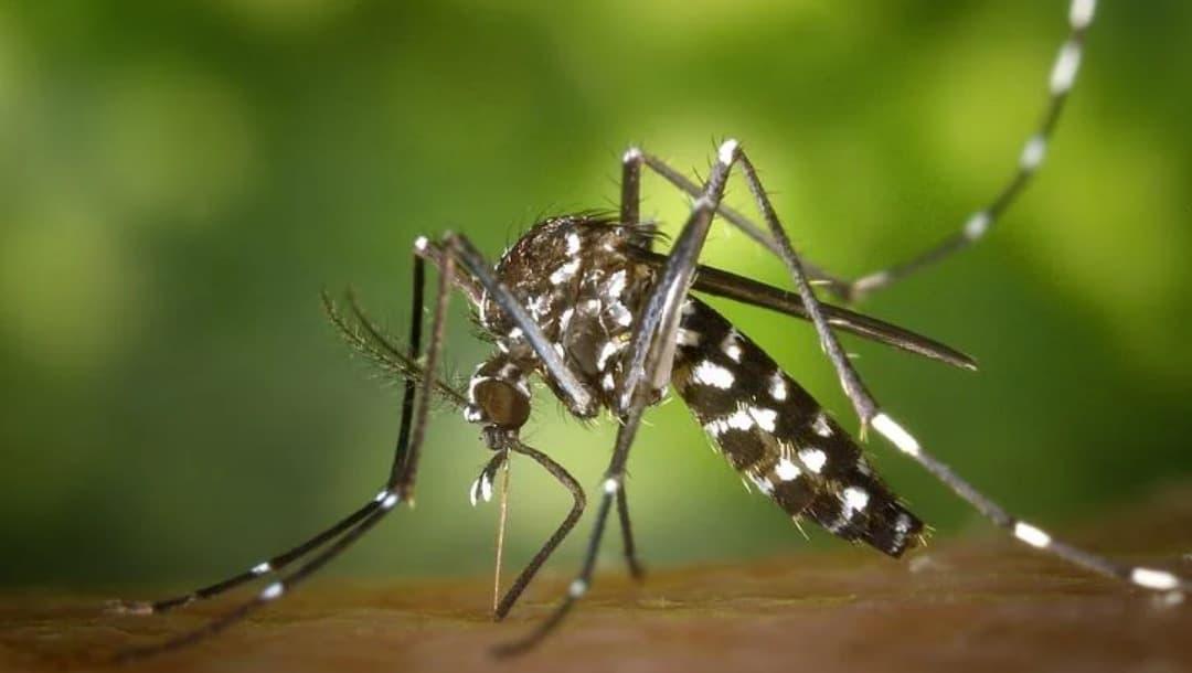 Combaten en Mérida a mosquito transmisor con nuevo método