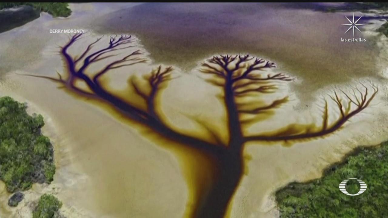 fotografian silueta de un arbol en lago australiano