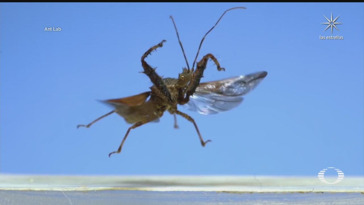 vuelo de insectos en camara lenta