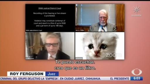 abogado se vuelve gato en videoconferencia