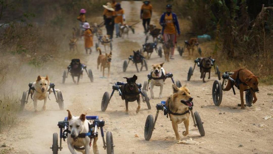 Refugio para perros discapacitados en Tailandia (Reuters)