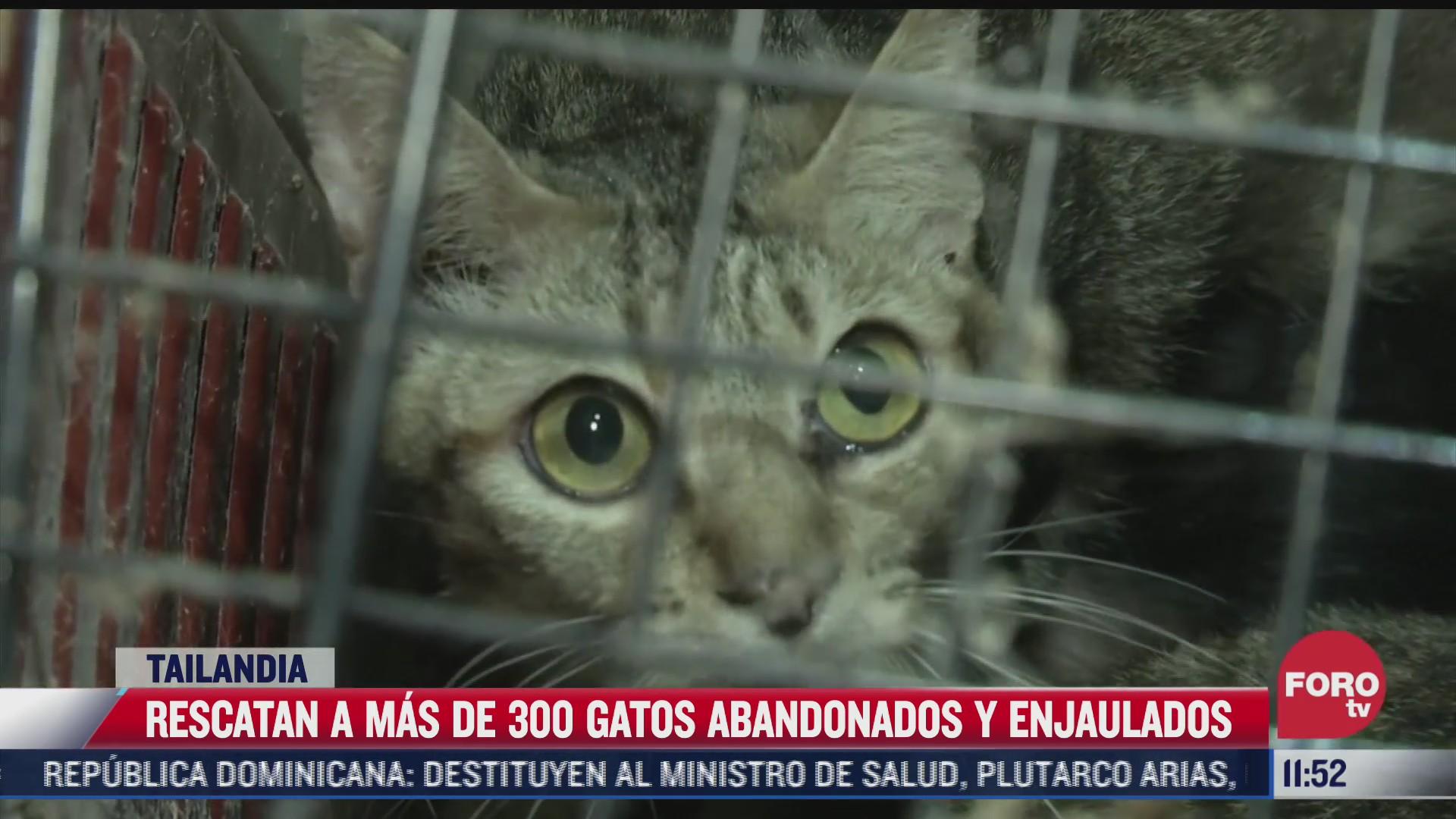 rescatan a mas de 300 gatos abandonados y enjaulados en tailandia