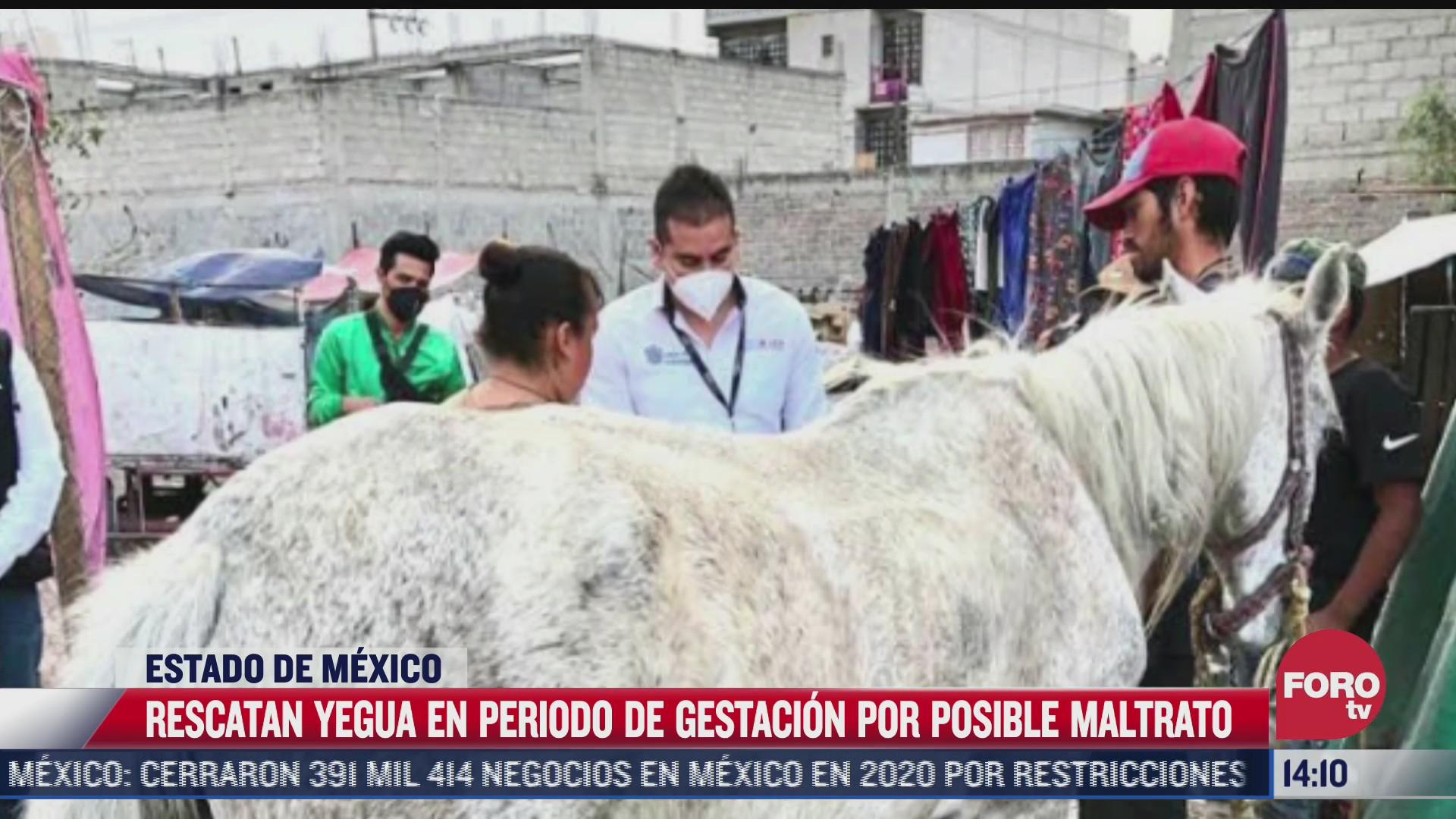aseguran una yegua en posible maltrato en ecatepec