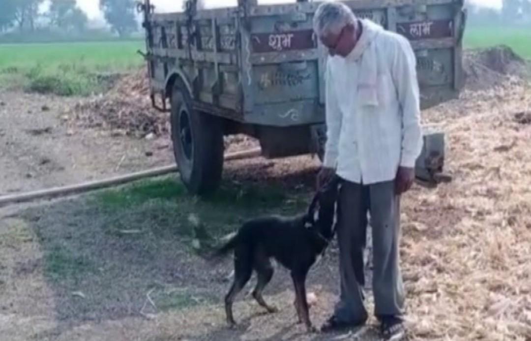 Hombre desheredó a sus hijos y puso a su perro en testamento