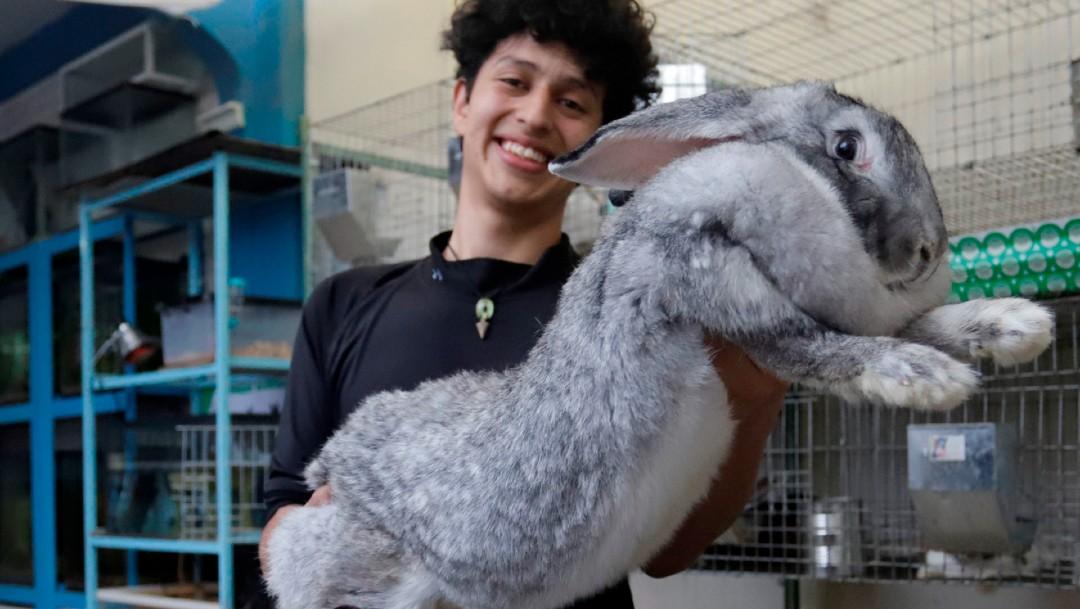 Estudiante de Puebla cría a los conejos más grandes del mundo