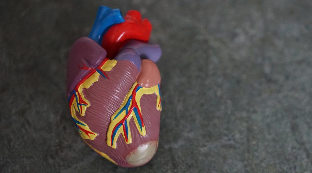 Covid puede matar células del músculo del corazón y afectar su contracción