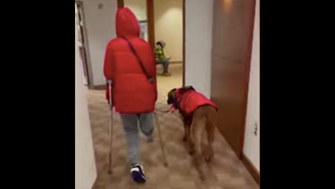 Dexter, el perro que ayuda a un niño sin pierna