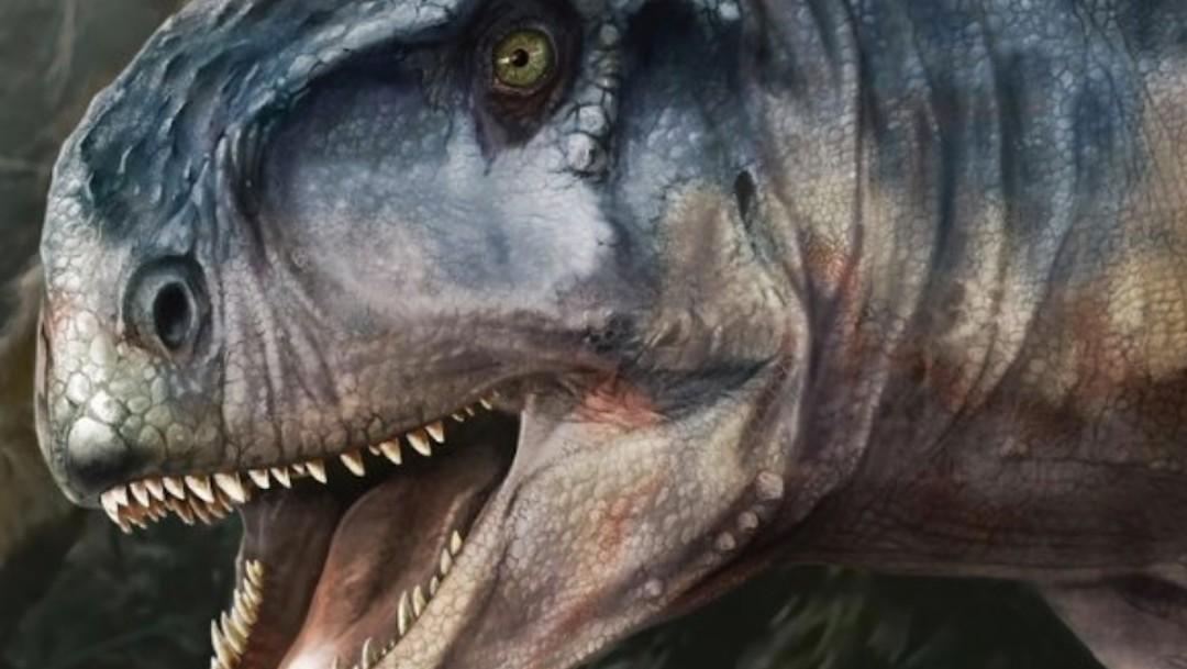 El Llukalkan aliocranianus, una nueva especie de dinosaurio carnívoro (Twitter: @tandfenviro)