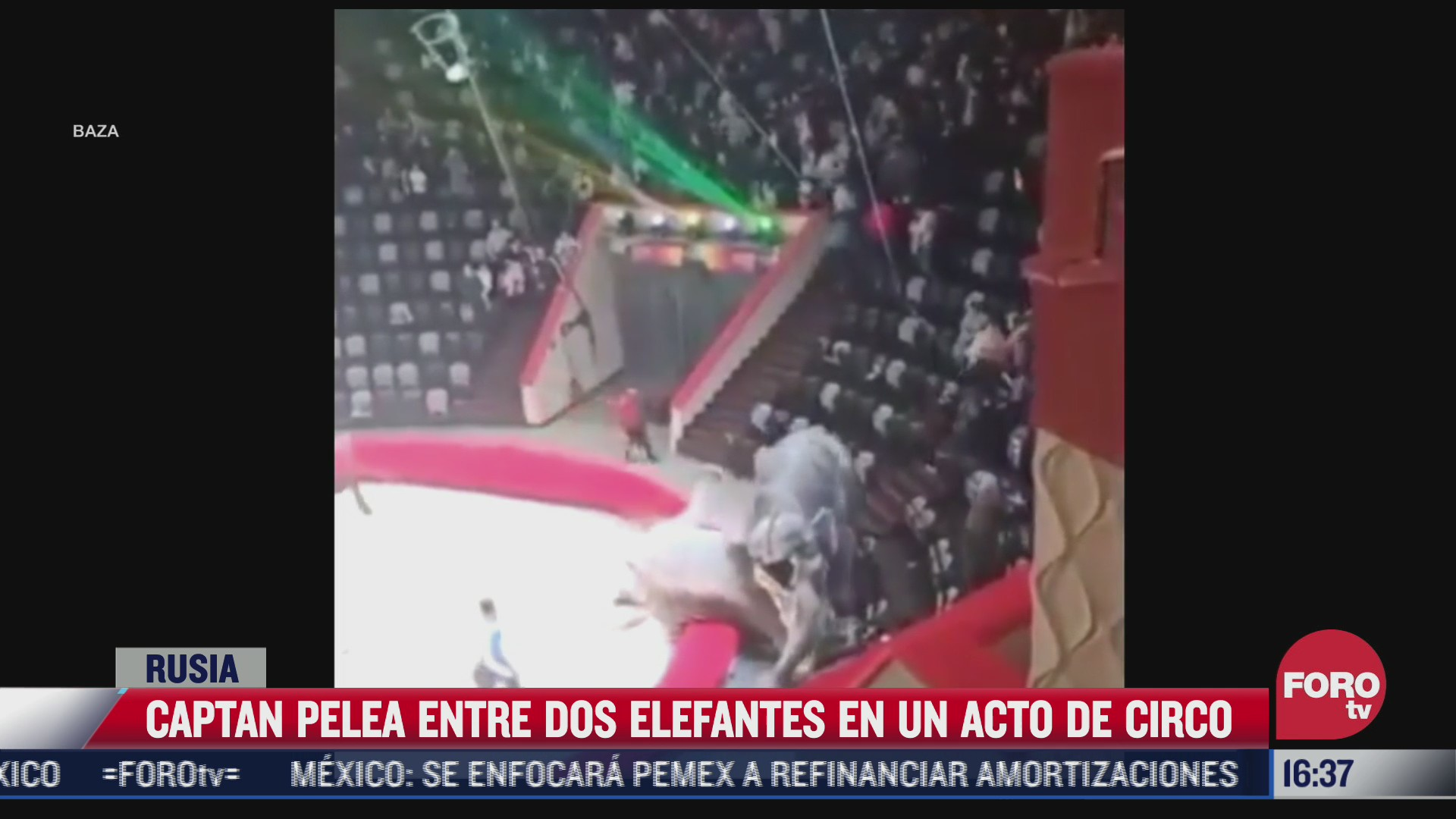elefantes pelean en plena funcion de circo