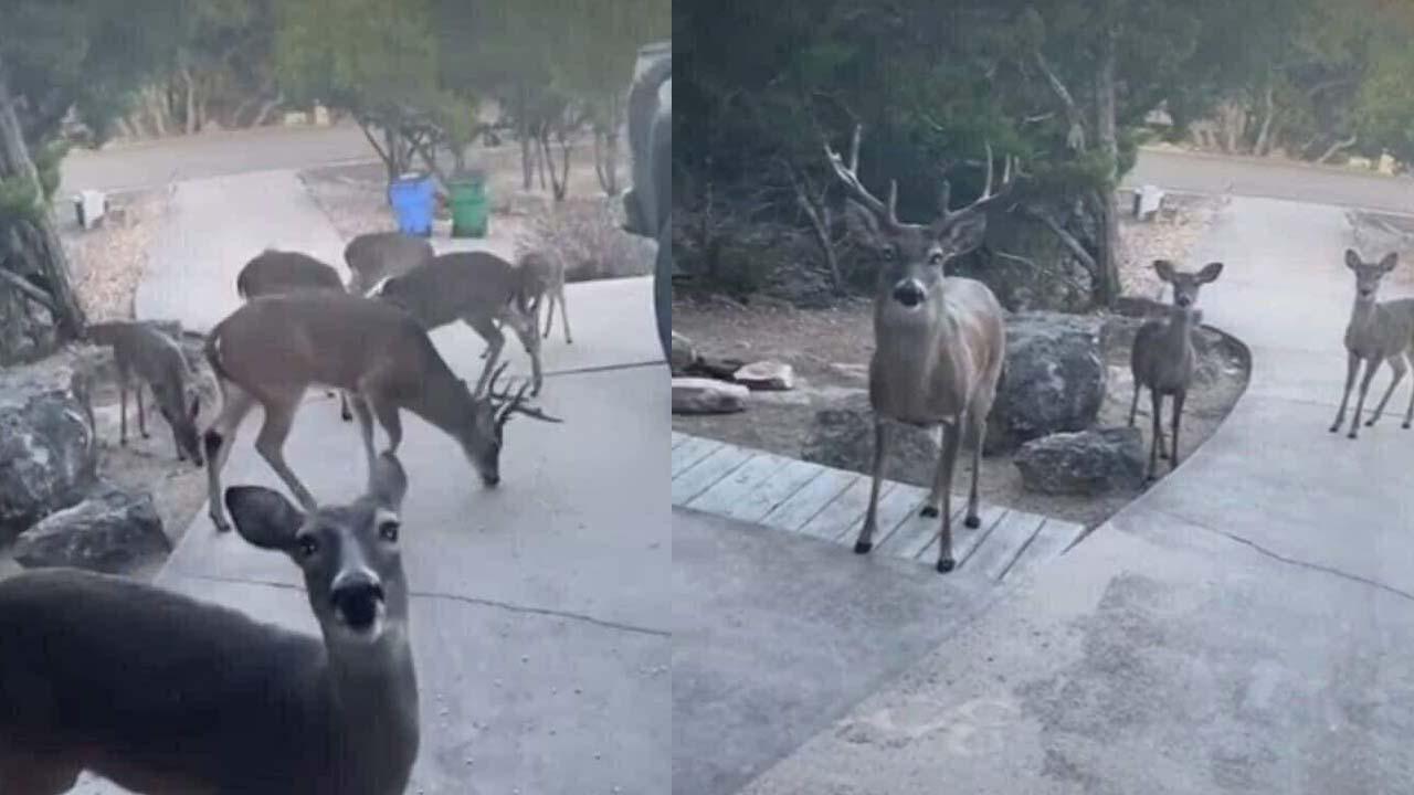 Fotos Animales escapan del incendio en Nuevo León