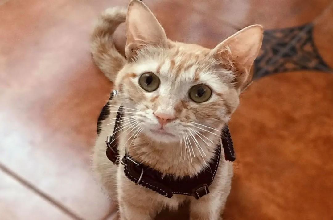 Denuncian violación de una gatita en Veracruz