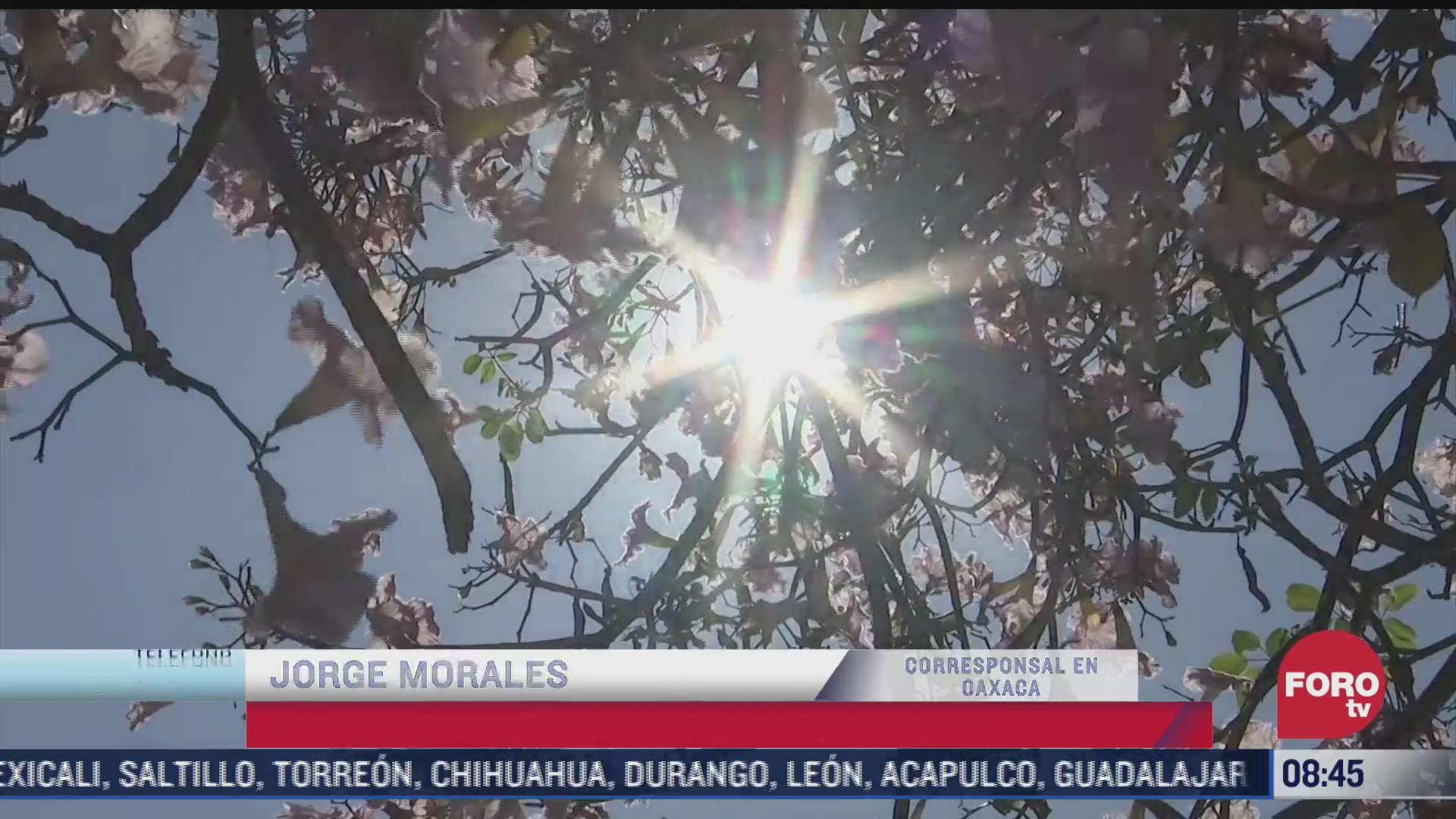 habitantes de diversos estados de la republica mexicana resienten los efectos de calor