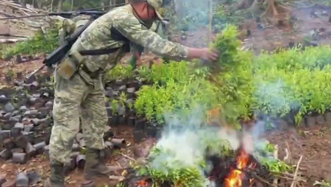 Hoja de coca, la nueva apuesta que hace el narco en Guerrero