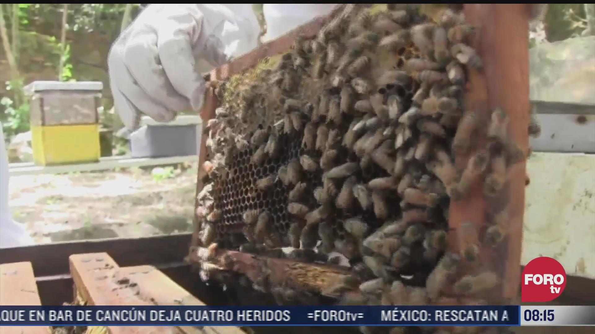 la sequia afecta al sector apicola en yucatan
