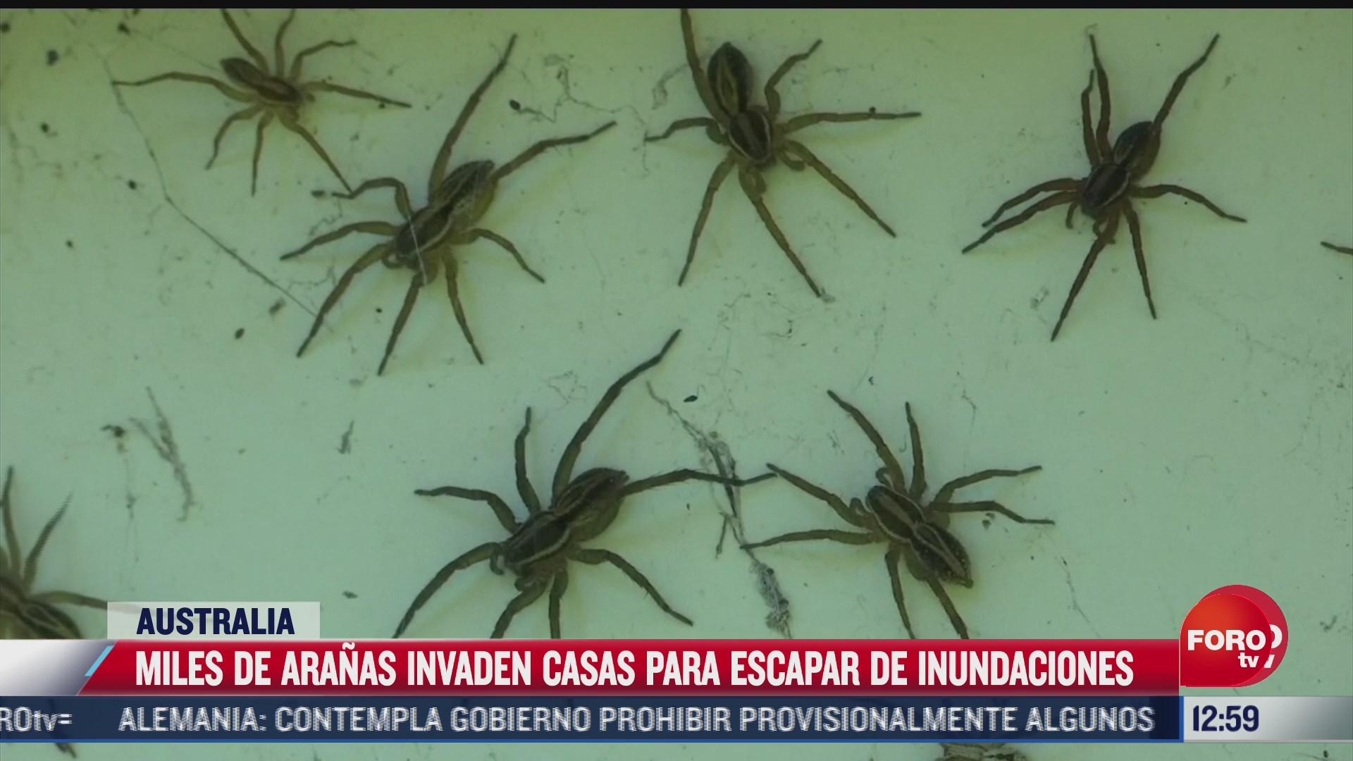 miles de aranas invaden residencias en australia