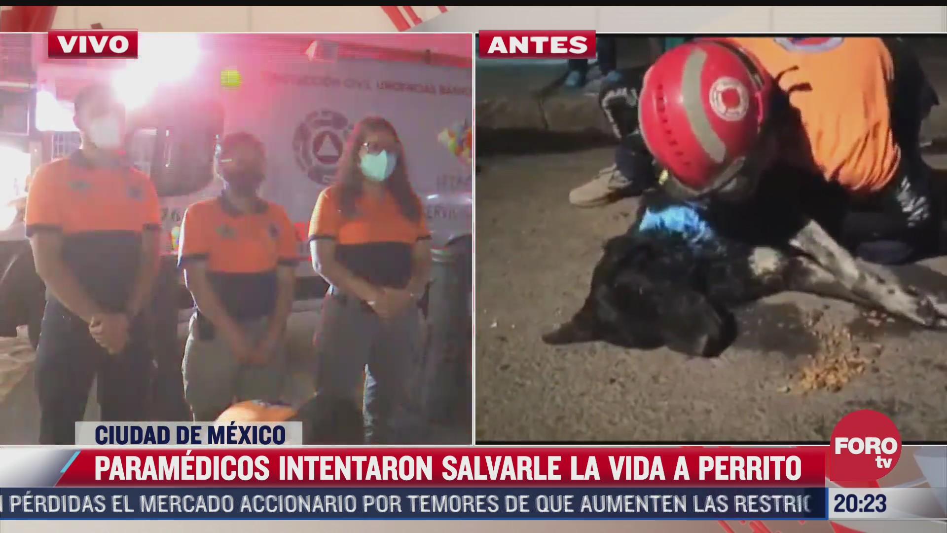 muere perrito que intento ser reanimado por paramedicos en iztapalapa
