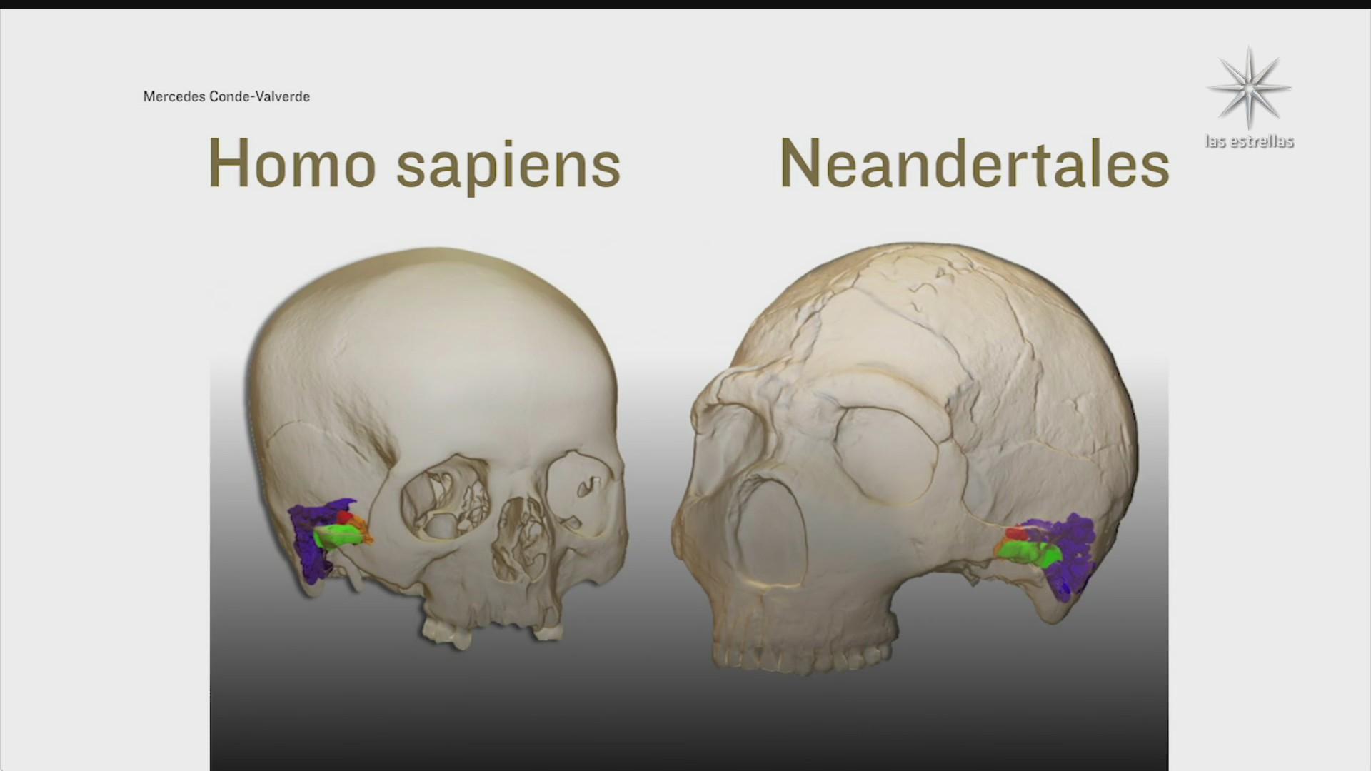 neandertales tenian la misma capacidad auditiva que los humanos actuales