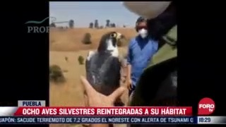 reintegran a su habitat a 8 aves silvestres en puebla