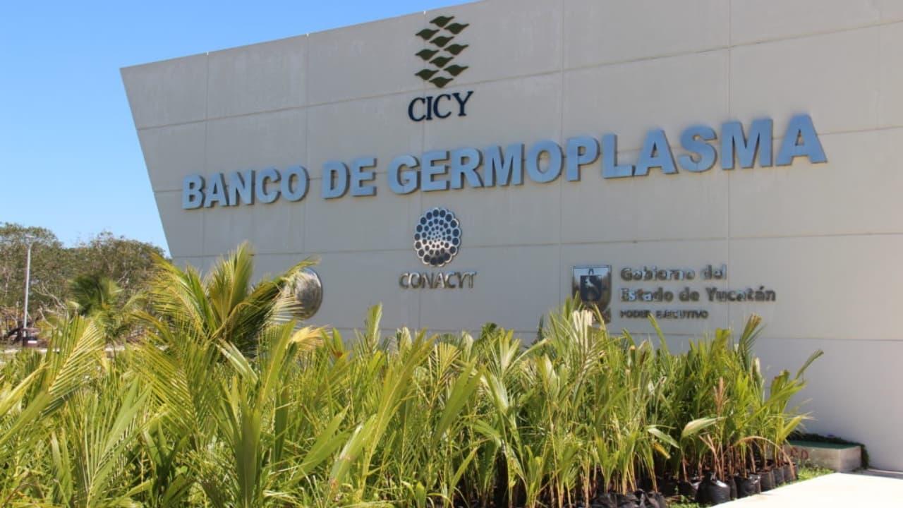 Banco de germoplasma en Yucatán recupera varias especies de plantas