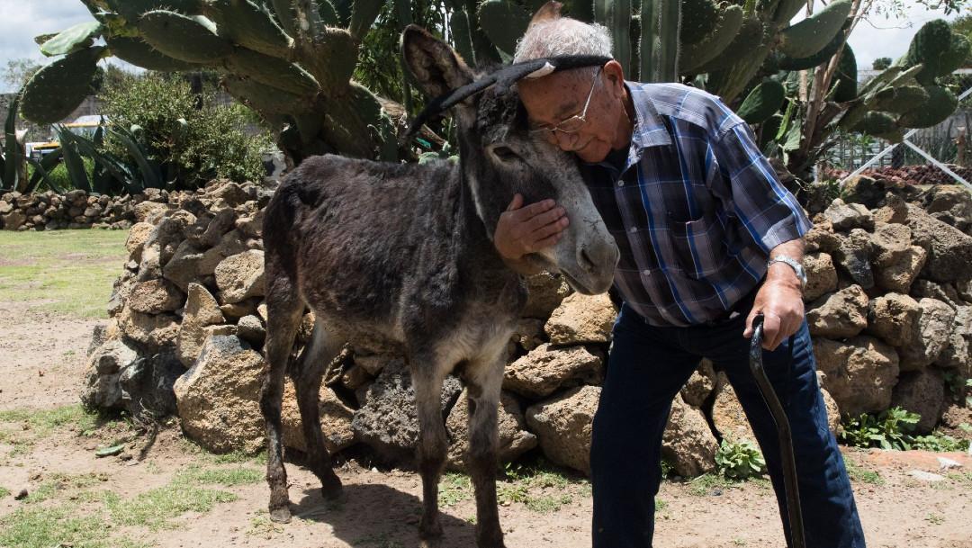Burrolandia, burro mexicano, santuario, protección de animales
