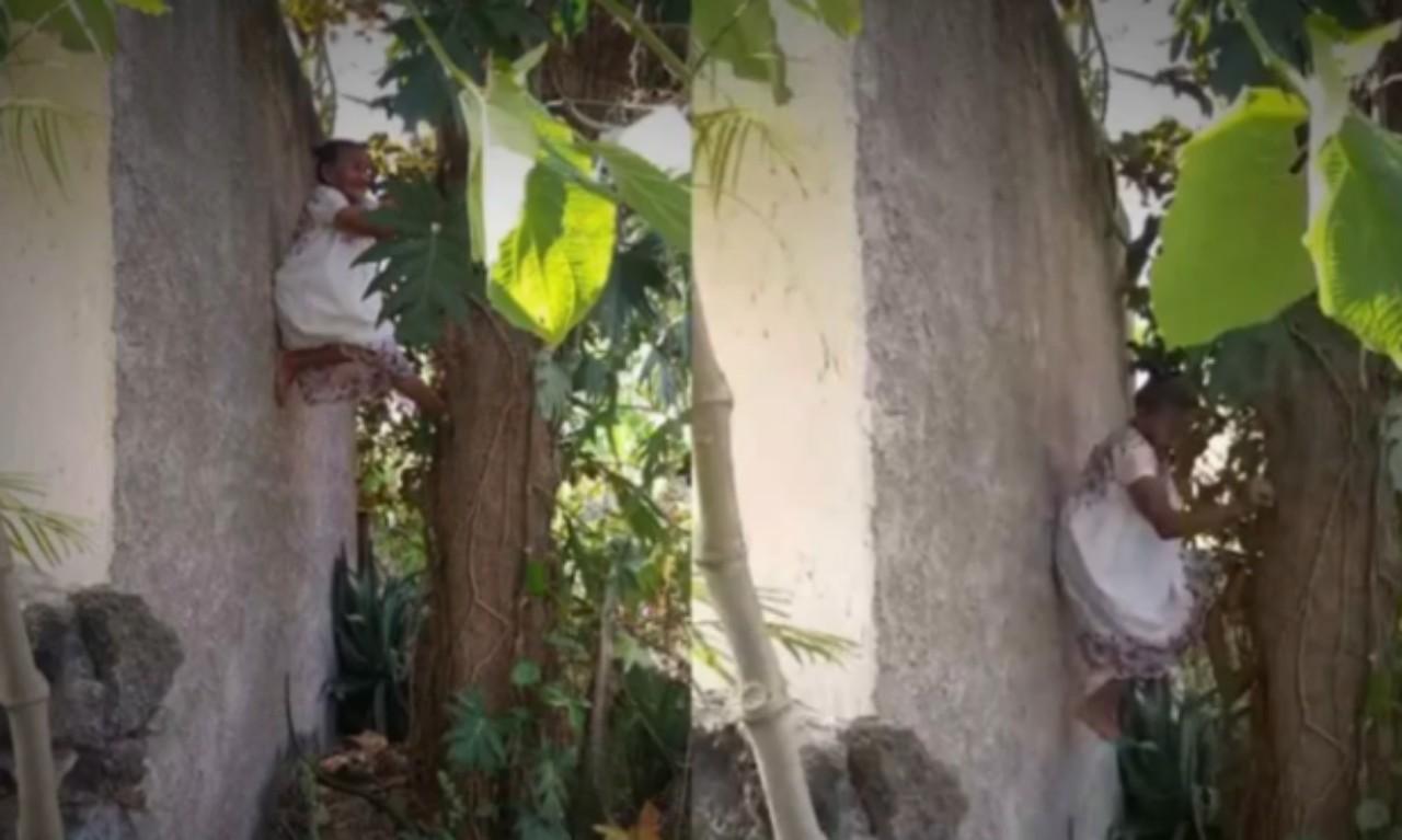 Abuelita de 88 años sube a un árbol para bajar fruta: VIDEO