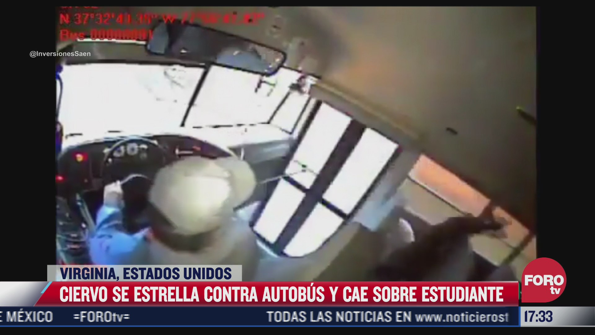 ciervo se estrella contra autobus y cae sobre estudiante en eeuu