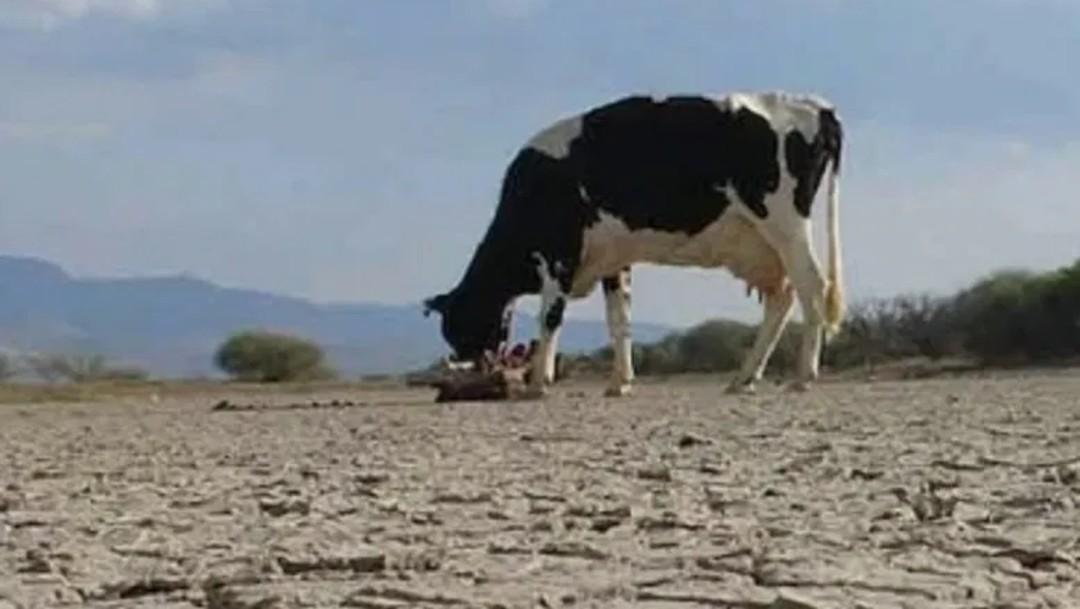 Colima enfrenta severa sequía en el 83% de su territorio