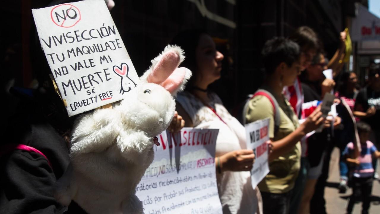 Diputados avalan dictamen que prohíbe realizar pruebas cosméticas en animales