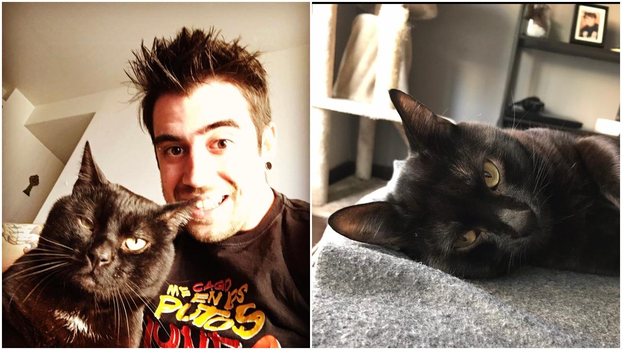 Don Gato, AuronPlay, youtuber, mascotas, gatos