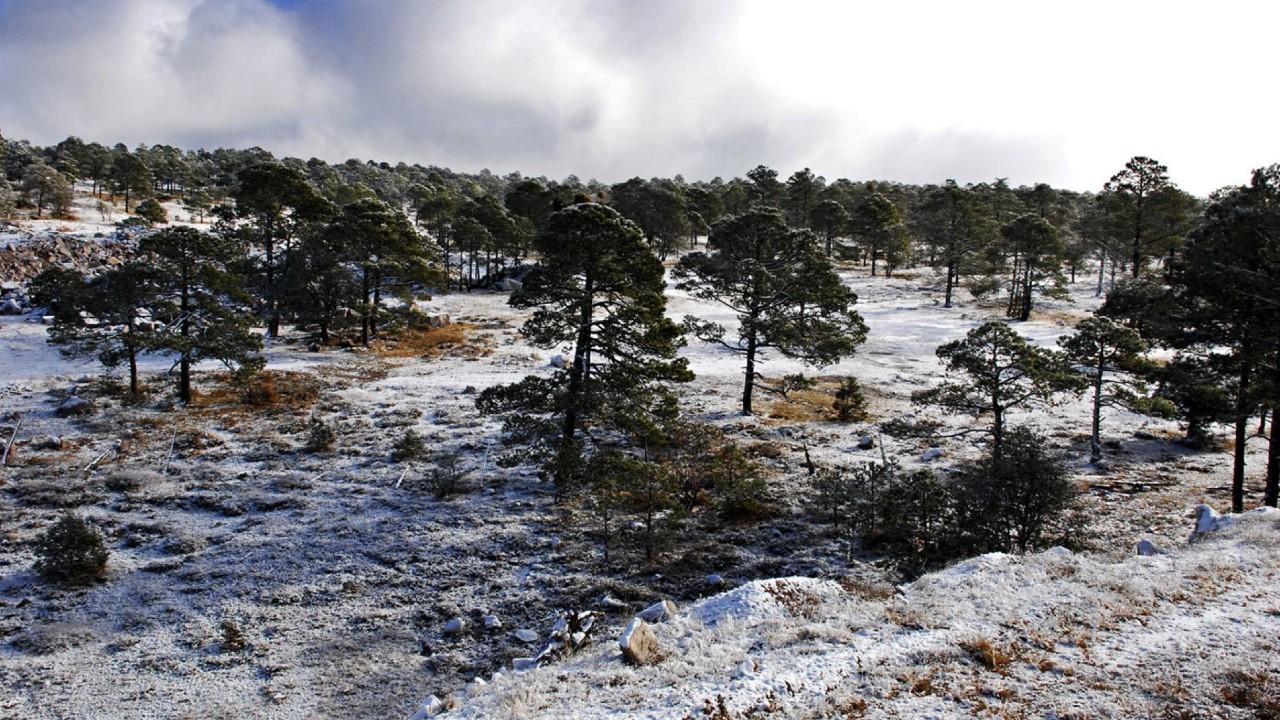 Frente frío 52 propiciará heladas en zonas montañosas de Chihuahua y Durango