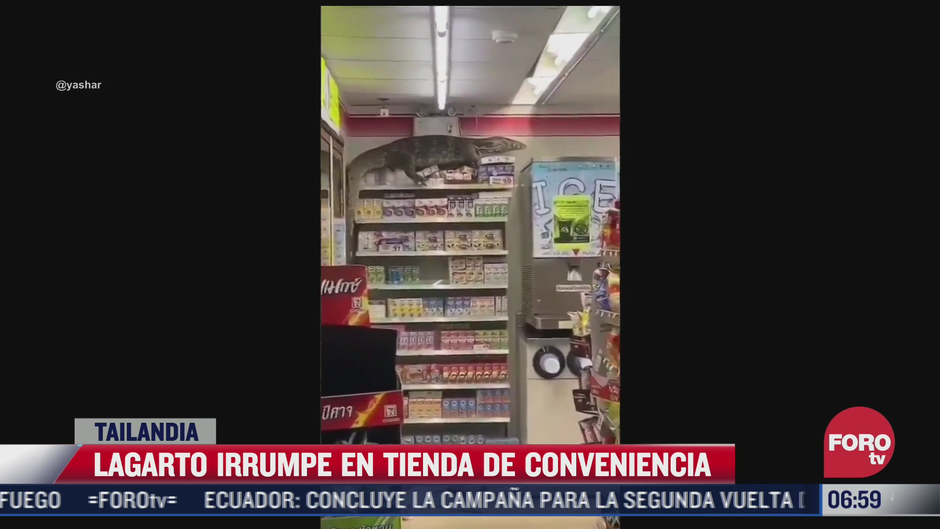 lagarto irrumpe en tienda de conveniencia