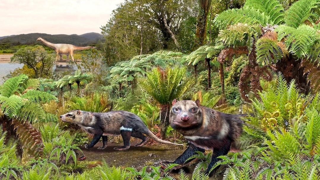 Orretherium tzen (Bestia de cinco dientes), un nuevo mamífero de la era de los dinosaurios (EFE)