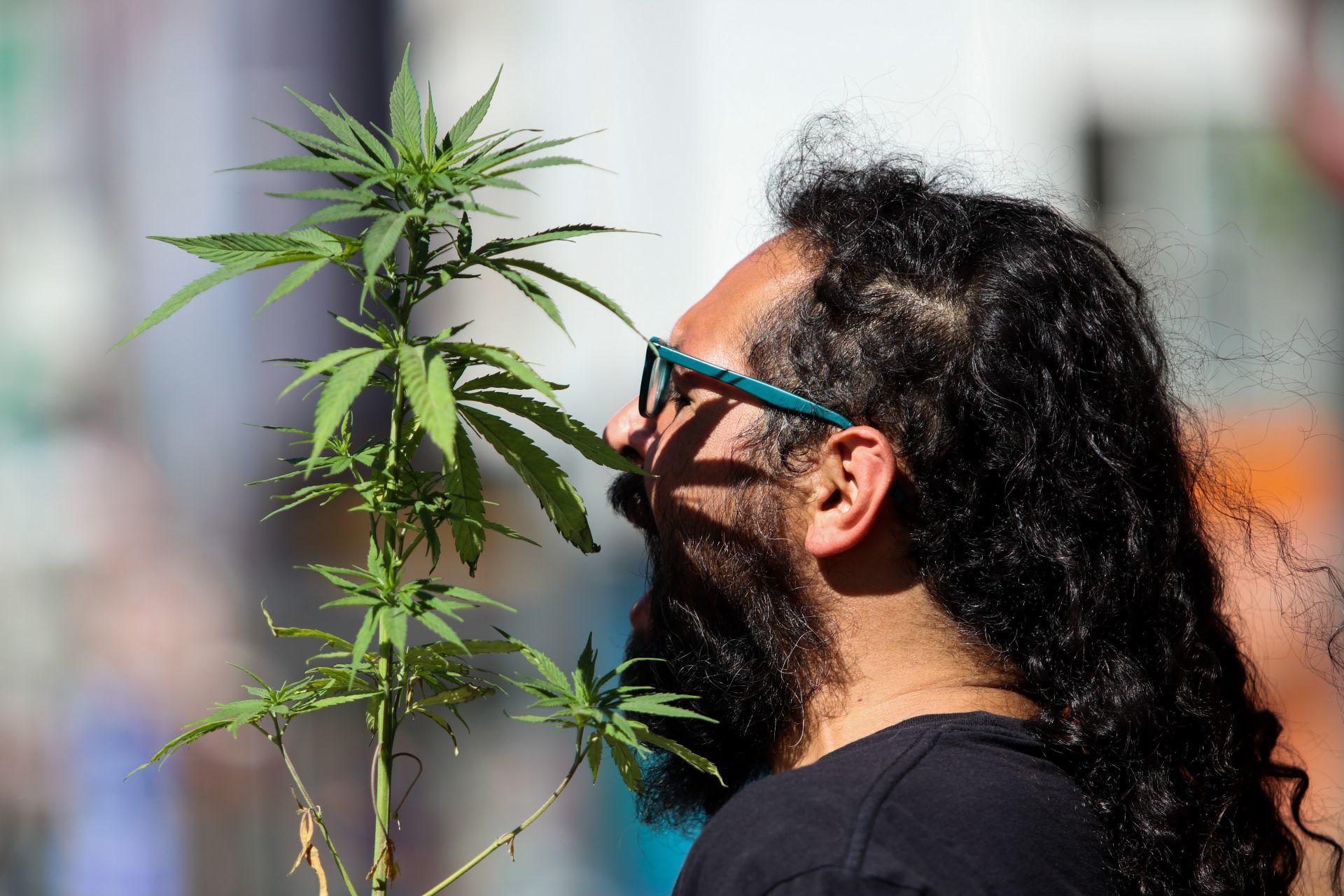 Senado-no-aprobará-en-este-periodo-Ley-para-regular-cannabis