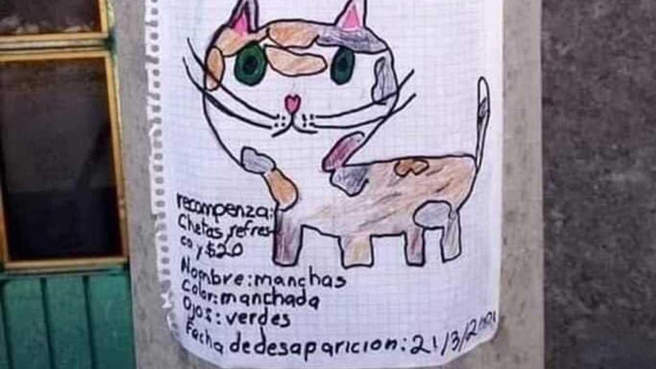 Niño busca a su gato. Cheetos refresco y 20 pesos recompensa