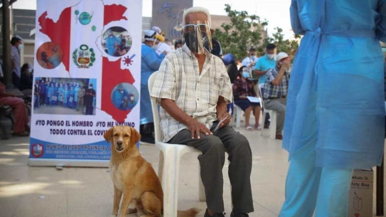 perros, adultos mayores, Perú, vacunas covid