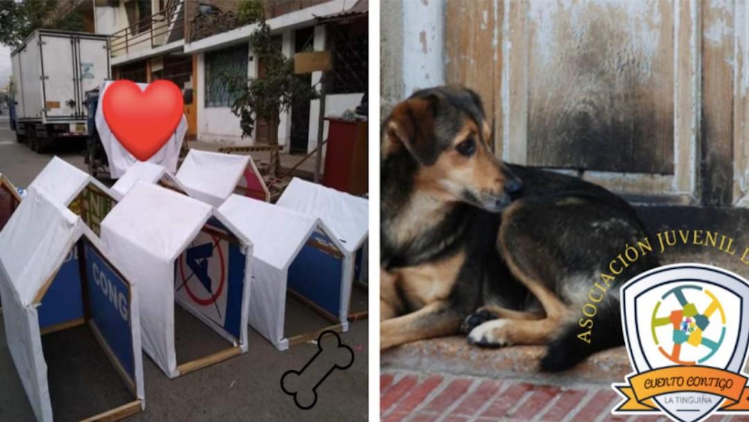 Convierten la propaganda electoral en casas para perritos sin hogar